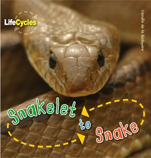 Life Cycles: Snakelet to Snake